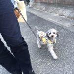 犬の散歩くらいしか運動しないのでウェイトを装着して体力アップを狙う!