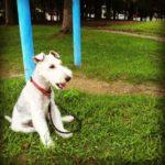 日々の健康の秘訣は愛犬との規則正しい生活のおかげ。